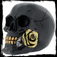 Black Rose From The Dead